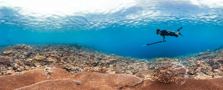 Spearfisher hunting on healthy reef