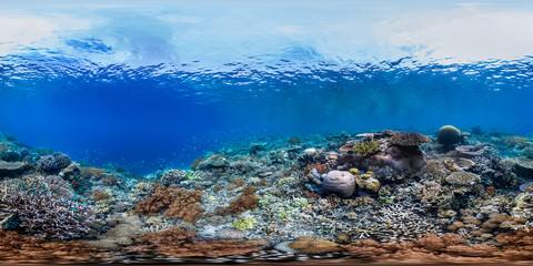 In de dag Koraalriffen Healthy coral reef in Raja Ampat Indonesia panorama