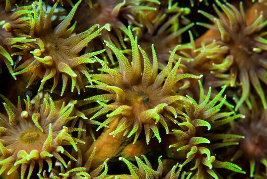 Polyps of a colorful soft coral