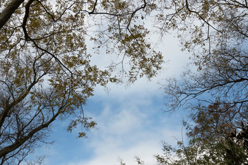 frame from yellow leaves and branches of trees on the background of the clouds, sky
