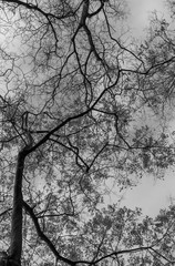 geometry branches of dry trees on the background of the sky