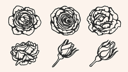 Rose ornament vector by hand drawing.Beautiful flower on brown background.Blaze rose vector art highly detailed in line art style.Flower tattoo for paint or pattern.