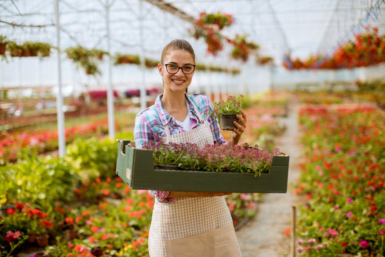 Young woman holding a box full of spring flowers in the greenhouse