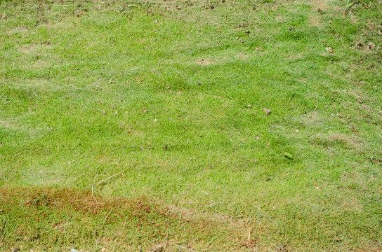 Zoysia Grass Texture