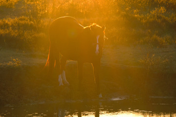 Horse during farm sunrise with sun rays for peaceful image.