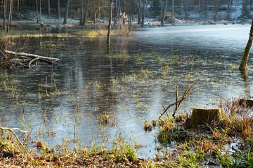 Moorlandschaft im Wald bei Wohlen AG, Schweiz