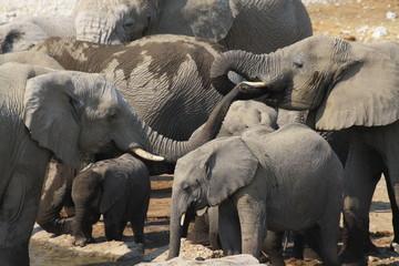 stado słoni stojące w wodzie podczas wodopoju