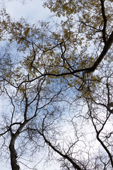 Branches with yellow leaves and dry branches of trees on the background of the sky