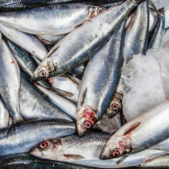 Fresh Fish at For Sale Saint Georges Market in Belfast