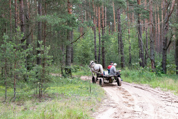 A horse harnessed to a cart rides through the woods with two men. Environmentally friendly vehicle, from the past.