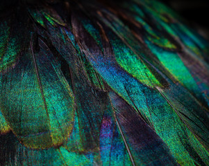 Close up of colorful duck feathers. Vivid colors