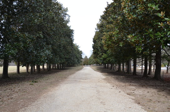 long gravel driveway lined with green trees