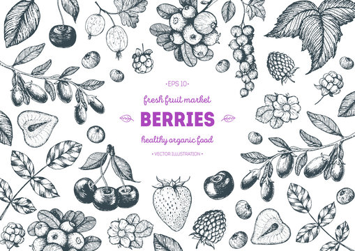 Berries hand drawn, vector illustration frame. Hand drawn sketch illustration with goji berries, cranberry, cloudberry, cherry, raspberry, currant, strawberry. Food design template with berries
