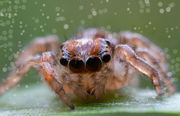 dust or debris on the camera's sensor or lens camera of super macro with Salticus scenicus jumping spider