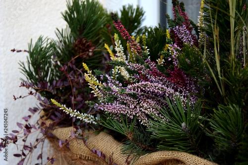 Winterharte Balkonpflanzen Im Herbst Und Winter Stockfotos Und