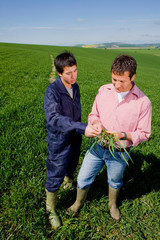 Farmer with worker examining young wheat crop in farm field