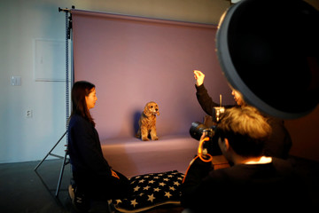 A photographer takes a photograph of a pet dog at a pet studio in Seoul