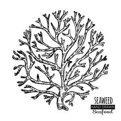Hand drawn seaweed. Underwater flora, sea water seaweeds aquarium kelp and corals.