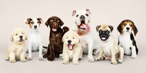 Wall Mural - Group portrait of adorable puppies