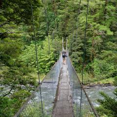 Cannibal Gorge swing bridge, St James Walkway, New Zealand.
