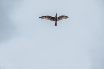 Seagull Soaring Through the Clouds with a Blue Sky