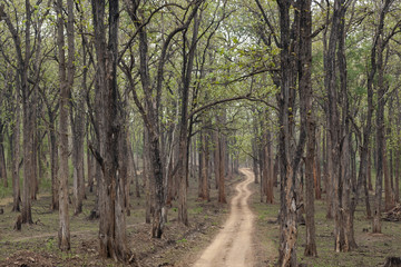 Safari forest trail in Kabini Wildlife Sanctuary , Karnataka, India.