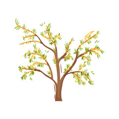 Small tree with ripe sea-buckthorns and green leaves. Organic product. Gardening theme. Flat vector icon