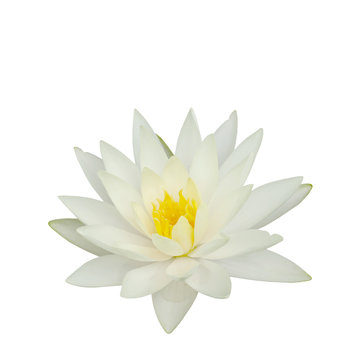 Beautiful water lily isolated on white background.Lotus flower