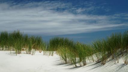 Beach grass on sand dune on New Zealand's west coast.