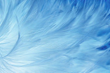 Beautiful dark blue feathers texture background. Wall mural