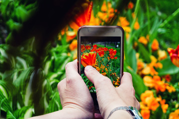 Smartphone photography capturing flower pictures on the phone