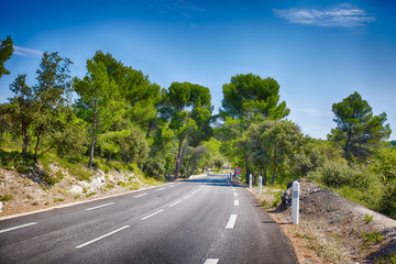 Lovely, empty country road lined with sycamore trees in Provence, southern France