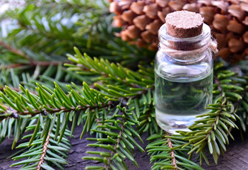 Fir needle essential oil in a glass bottle and green coniferous tree branches with cones.Spruce aroma oil for spa,aromatherapy and bodycare.Selective focus.