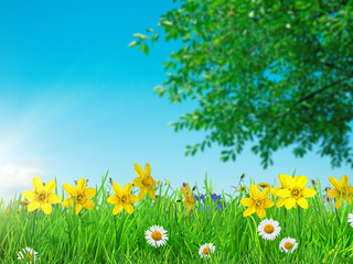 a spring flowers and green grass background