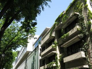Foto op Textielframe Aziatische Plekken 新緑のケヤキ並木が美しい5月の表参道(表参道ヒルズ同潤館付近)