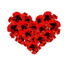 Poppy flower vector illustration with heart form.