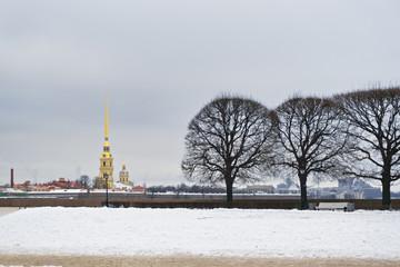 Trees on Vasilievski island closeup