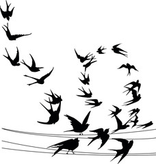 Swallow in flight. vector image. spring. Common birds on the power line. Vector silhouette a flock of birds
