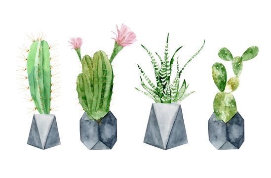 Set of watercolor blossom mexican cactus in concrete geometric pots. Colorful miniature cacti illustrations from desert on white background, vector format. Hand drawn blooming plant for office indoor