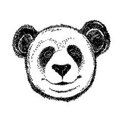 Hand drawn portrait of panda. Vector illustration isolated on white.