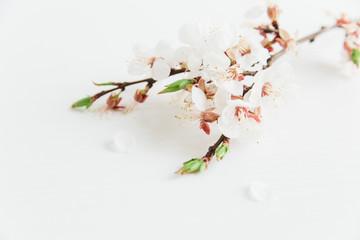 white spring flowers.white background.stylish minimal image
