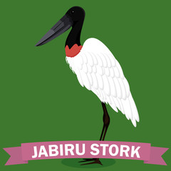 Jabiru stork genus cartoon bird