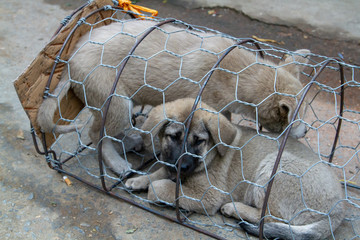 dog in cage for sale