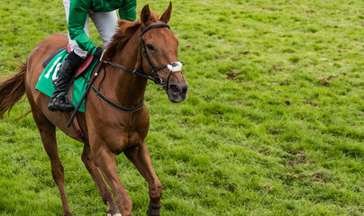Close up on single race horse and jockey galloping on a grass covered race track