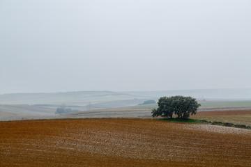 Paisaje ondulado con tierras de cultivo y encinas, nevando. Comarca de Los Oteros.
