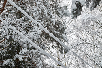 Electric wires covered with snow.