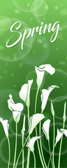 White callas on a green background with bokeh effect. Spring picture. Floral decor.