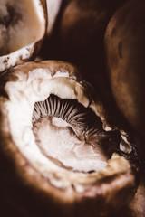 Baby Bella Mushroom Up Close