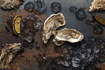Oysters on vintage background