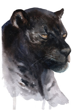 watercolor drawing of an animal: genus of panther, black jaguar